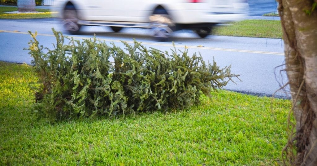 What To Do With Your Christmas Tree in Bay Area